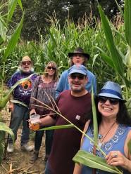 Lost in the Corn Maze at Corn Fest